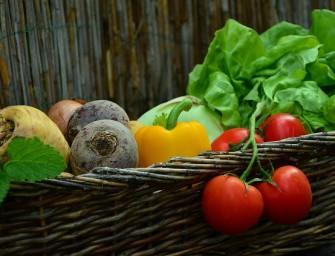 Vegetarizmas – ką sakyti tėvams?