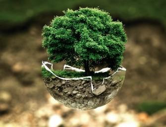 Ekologiškas gyvenimo būdas: malonesnis, sveikesnis ir įdomesnis