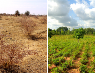 Sodinkite medžius naršydami internete: Ecosia