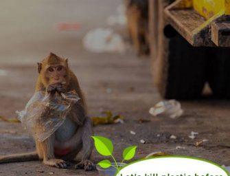 """""""Plastikiniai"""" maišeliai, pagaminti iš bulvių ir tapijokos, gali tapti maistu gyvūnams ir būti perdirbti!"""