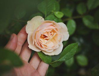 Apie netobulumą kaip vientisos tylos pažinimo šaltinį