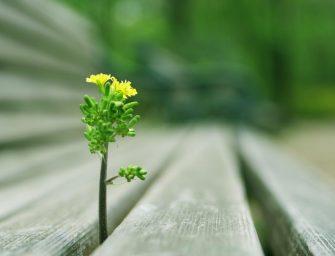 Jei negali nieko pakeisti, pakeisk tai, ką gali…